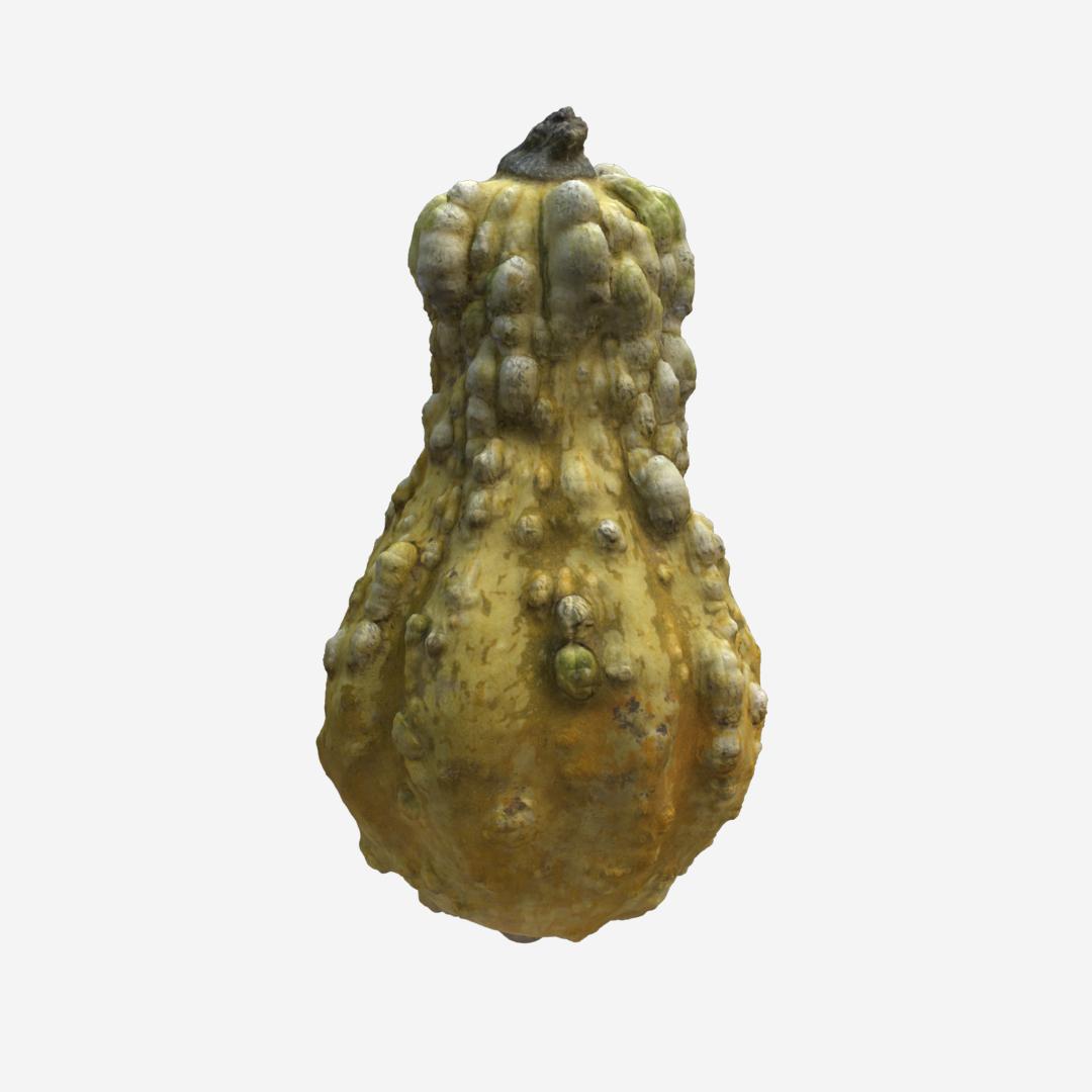 Gourd A