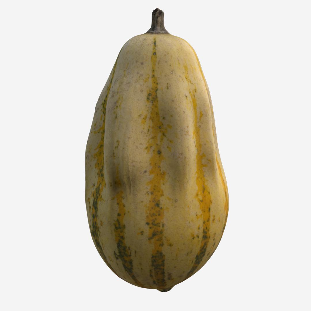 Gourd C