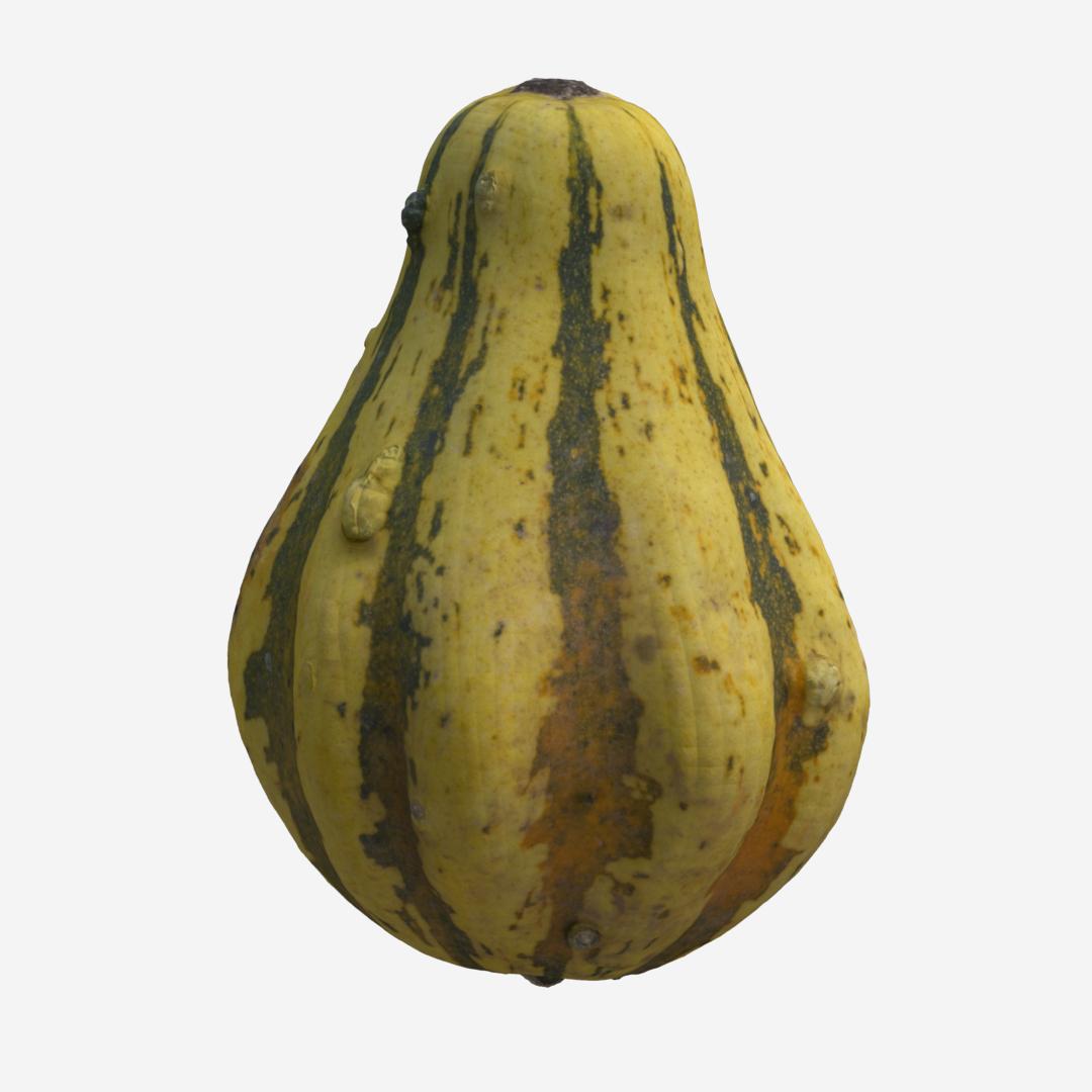 Gourd D