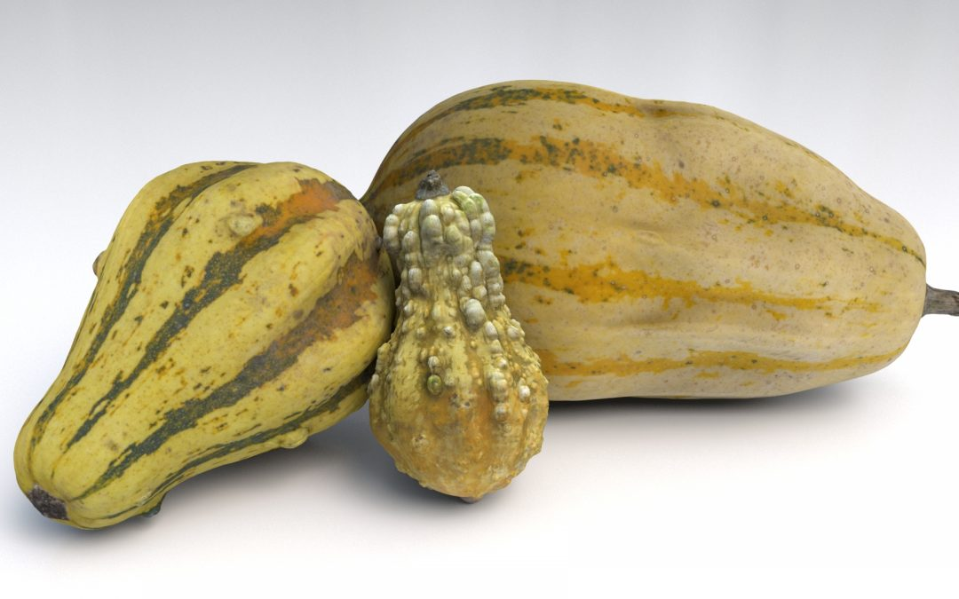 CG Object Pack 01 – Gourds
